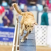 Thumbnail image for Episode 132: Contrarianism in Dog Agility