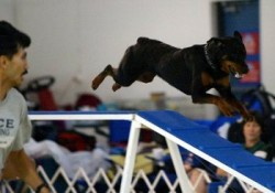 """Episode 27: """"Off Breed"""" Dogs in Agility post image"""