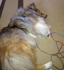 Episode 35: Alternative Medicine for Agility Dogs post image