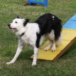Episode 38: Tips for Retraining Your Agility Dog thumbnail
