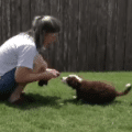 Puppy Tugging: Teaching the Release thumbnail