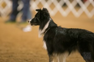 Episode 77: The Secret to All of Dog Agility post image