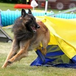 Episode 84: Large Dog Challenges thumbnail