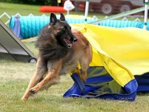 Episode 84: Large Dog Challenges post image