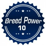 The Breed Power 10 for 2008 thumbnail