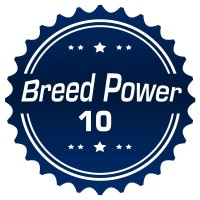 American Staffordshire Terrier Ranking by PowerScore for 2016 Q2 post image