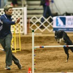 Episode 95: Interview with the 2015 26″ National Agility Champion Desiree Snelleman thumbnail