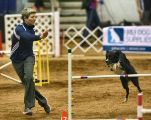 Episode 95: Interview with the 2015 26″ National Agility Champion Desiree Snelleman post image