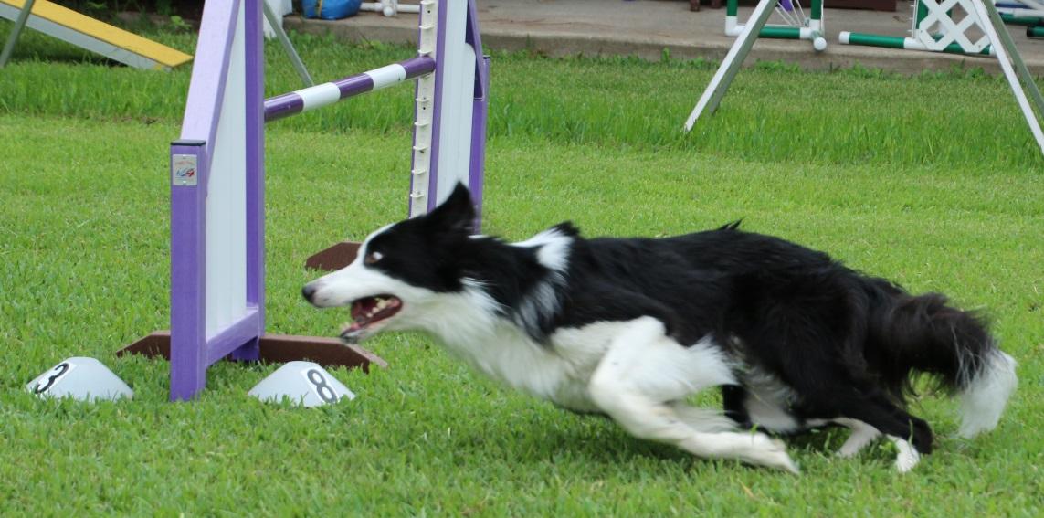 dog of breed visual dictionary