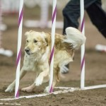 Episode 122: Debugging Your Dog Agility Training thumbnail
