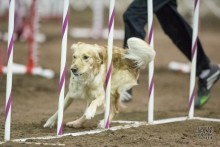 Post image for Episode 122: Debugging Your Dog Agility Training