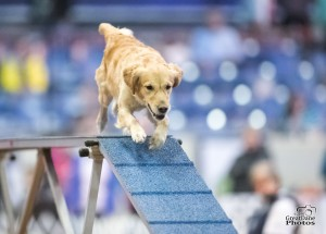 Episode 131: Free Your Agility Dog post image