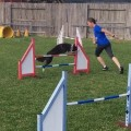 Thumbnail image for Handling Exercises for 2016 AKC Nationals #18 Choice