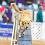 Episode 132: Contrarianism in Dog Agility thumbnail
