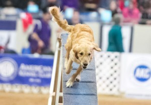 Episode 132: Contrarianism in Dog Agility post image