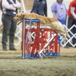 Episode 134: Priming Your Dog Before an Agility Trial thumbnail