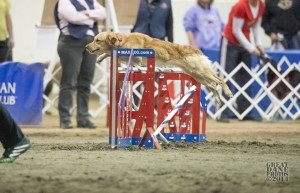 Episode 134: Priming Your Dog Before an Agility Trial post image