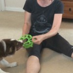 How to Teach Your Puppy to Release a Toy in a Motivational Way thumbnail