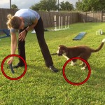 Puppy Tugging: Introducing the Two Toy Game thumbnail