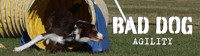 Bad Dog Agility header image