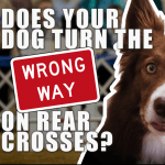Does Your Dog Turn the Wrong Way on Rear Crosses? (Facebook Live) thumbnail