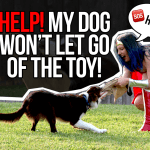 Help! My dog won't let go of the toy! (Facebook Live) thumbnail