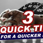 3 Quick Tips for a Quicker Dog (Facebook Live) thumbnail