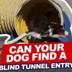 Can Your Dog Find a BLIND Tunnel Entry? thumbnail