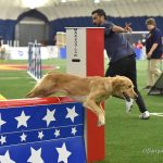 Episode 164: The Value of Outside Influence on Your Dog Agility Training thumbnail