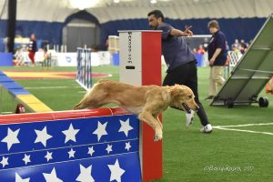 Episode 164: The Value of Outside Influence on Your Dog Agility Training post image