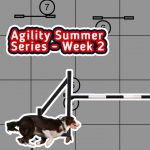 Agility Summer Series – Week 2 thumbnail