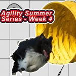 Agility Summer Series – Week 4 thumbnail