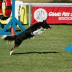 The Bad Dog Agility Weekly for October 25, 2017 thumbnail