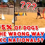 Did 75% of dogs go the wrong way at AKC Nationals? thumbnail