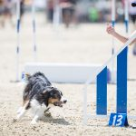 Episode 201: The European Open and Border Collie Classic with Sarah Baker thumbnail