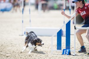Episode 201: The European Open and Border Collie Classic with Sarah Baker post image