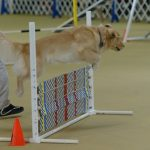 Episode 204: How to Use Proofing in Your Dog Agility Training thumbnail