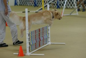 Episode 204: How to Use Proofing in Your Dog Agility Training post image