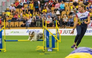Episode 206: Three Lessons from the Agility World Championship post image