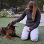 Episode 233: Changing Your Agility Dog's Unwanted Behavior thumbnail