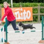 Episode 243: Does Your Agility Dog Trust You? thumbnail