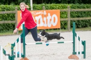 Episode 243: Does Your Agility Dog Trust You? post image