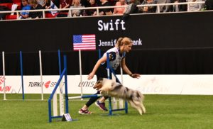 Episode 246: Should You React or Anticipate in Dog Agility? post image