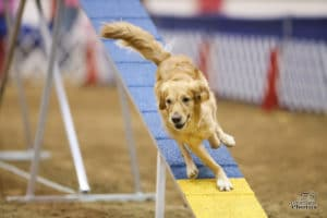 """Episode 250: Is Your Dog Agility """"Good Enough"""" post image"""